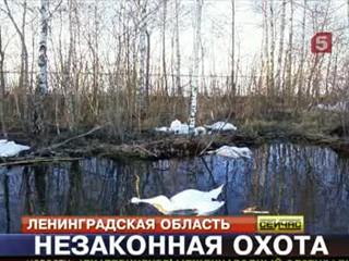 РЕН ТВ все новости