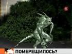 Новость на Newsland: В Нижегородской области объявилась чупакабра.