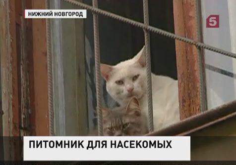 Пенсионерка в Петербурге держит кошек и собак дома в антисанитарных условиях