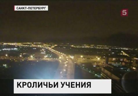 Пара кроликов самопровозгласили себя защитниками спокойствия жителей Петербурга