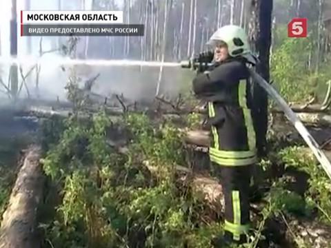 лесной пожар подмосковье уничтожил поселок
