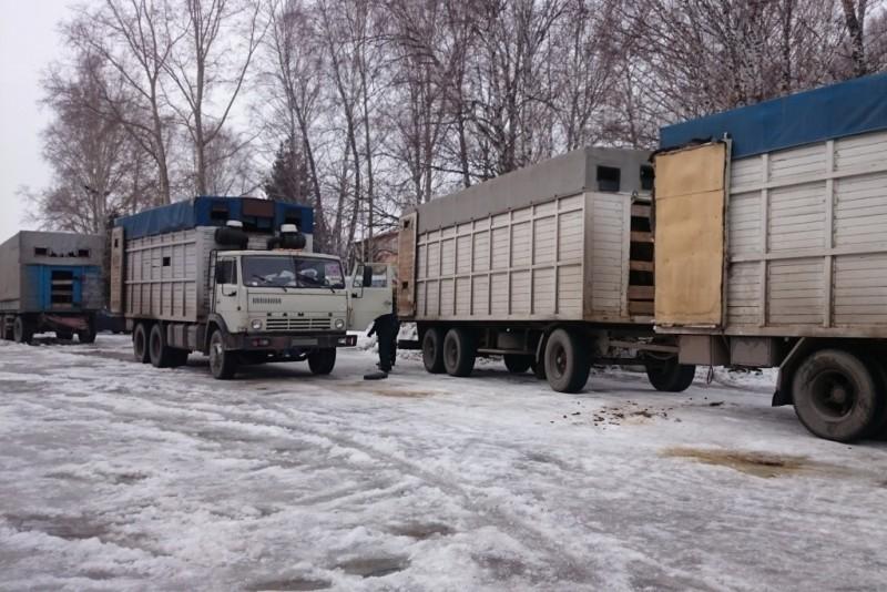 ВТомске более70 лошадей пытались перевезти вдвух грузовиках ФОТО