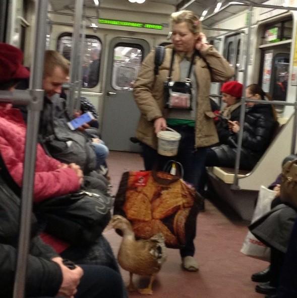Гусь-попрошайка ходит повагонам метро вПетербурге ФОТО
