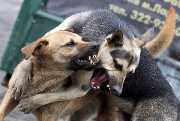 ВМагадане решено отлавливать бездомных животных круглосуточно