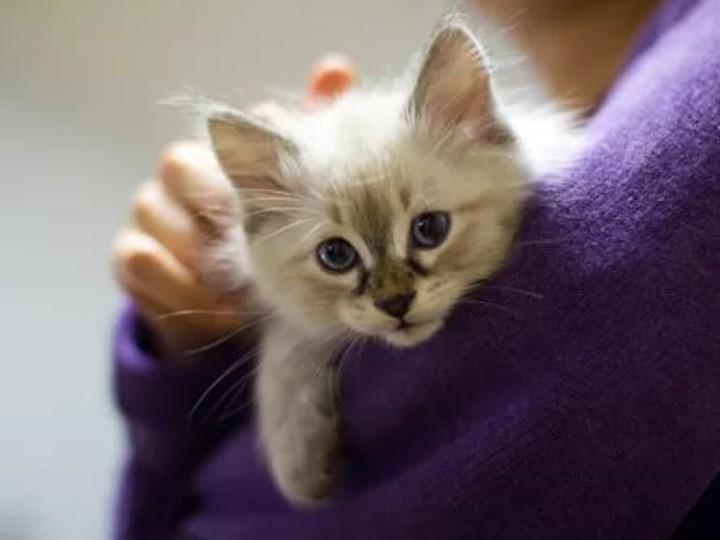 Подросток спас котенка наодном изжуткихперекрестков Альметьевска ВИДЕО