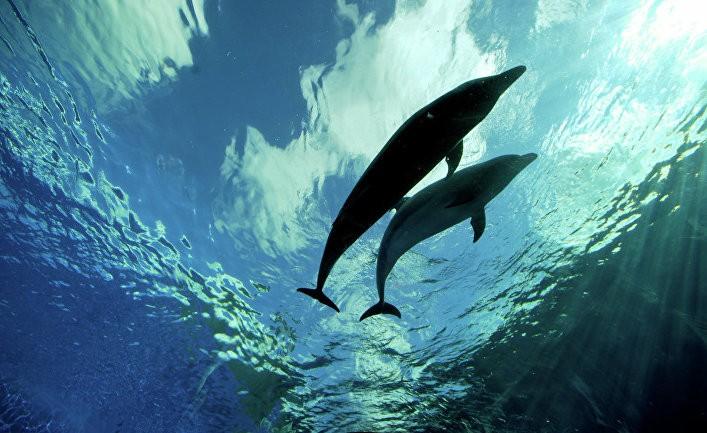ВКраснодарскомкрае жестоко расстреляли двух дельфинов