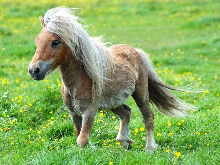 ВПерми цыгане украли удетей слепого пони ипотребовали выкуп