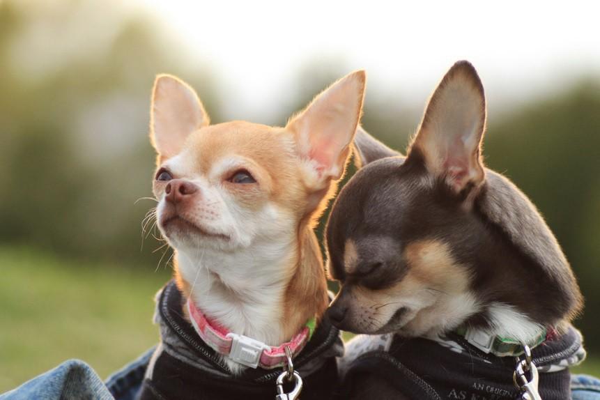 Обама, апорт! Американцы называют собак именами президентов игероев «Гарри Поттера»