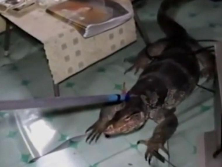 Пожилая тайка вызвала спасателей, обнаружив под кроватью огромного варана
