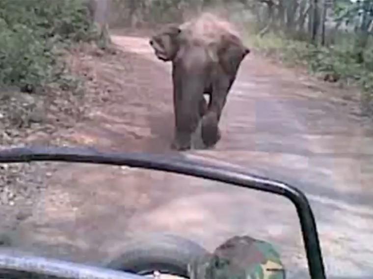 Рассерженный слон напал автомобиль стуристамивИндии