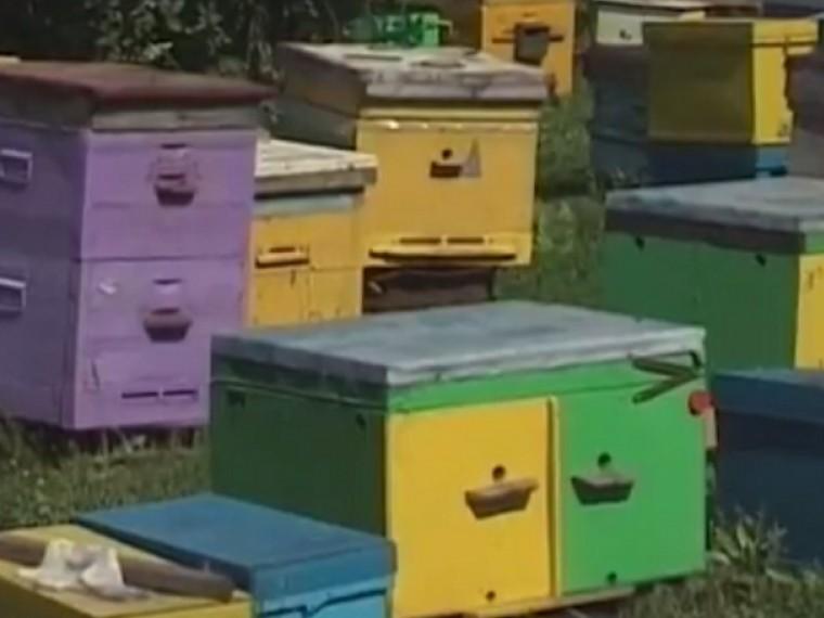 ВПензенской области пчелы мрут отпестицидов