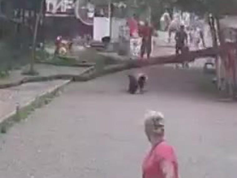 приморье дерево рухнуло посетительницу зоопарка