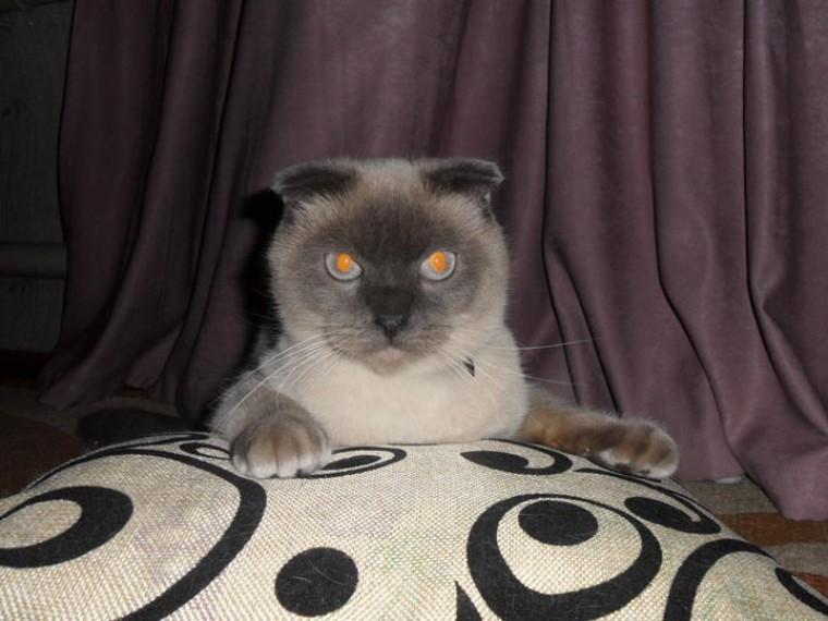 Барнаульский кот выступил завозвращение Аляски России