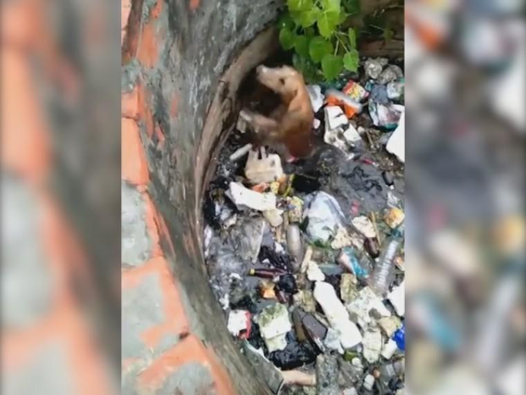 Жуткую казнь собаки вИндии снималинавидео