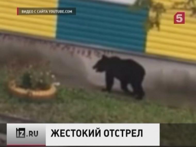 Минсельхоз Сахалинской области подаёт жалобу впрокуратуру наместных полицейских, застреливших медвежонка