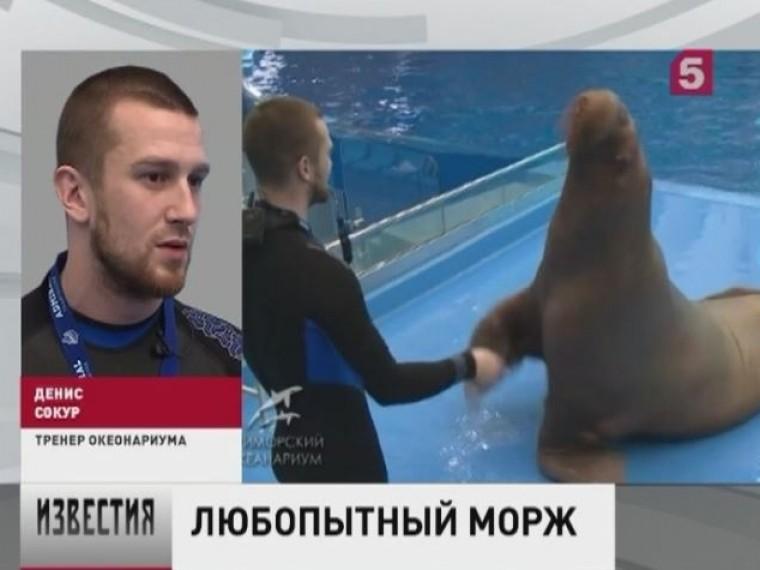 Тренера Приморского океанариума уволили заизбиение моржа