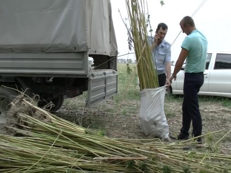 Краснодарский полицейские изъяли уместного жителя 57 килограммов конопли
