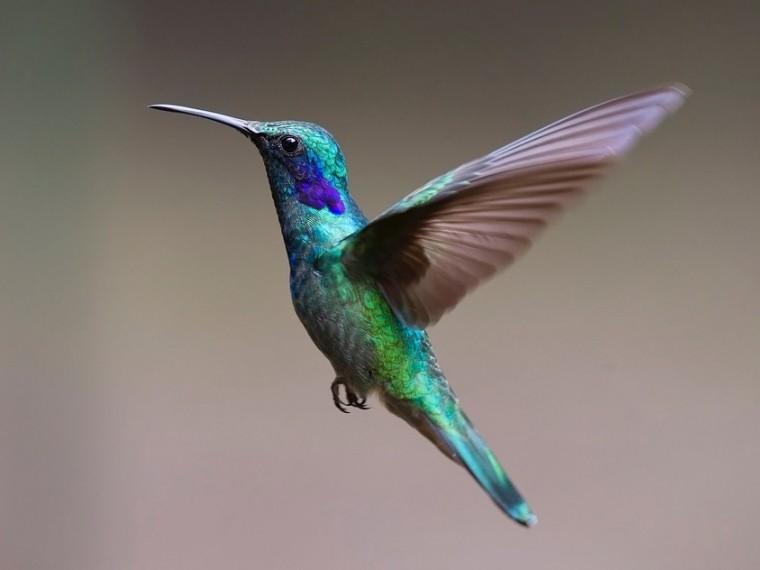 ВПриморье прилетели «колибри»— жители шокированы