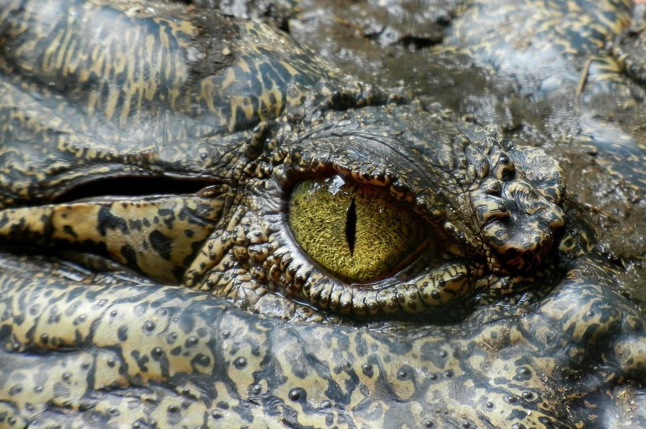 китайского зоопарка сбежали крокодилов