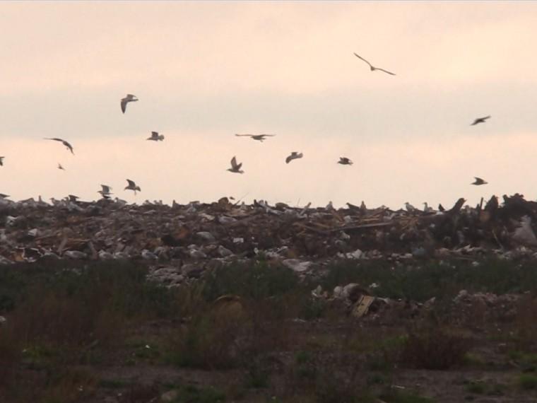 ВПетербурге рекультивируют огромный мусорный полигон«Новоселки»