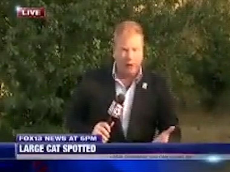 Журналист выдал впрямой эфир экстренный репортаж, перепутав кошку спумой