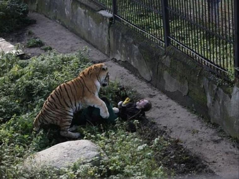 известно тигр напал работницу зоопарка калининграде