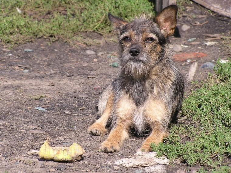 Окровавленного пса сторчащим изгорла ножом нашли вЧелябинске