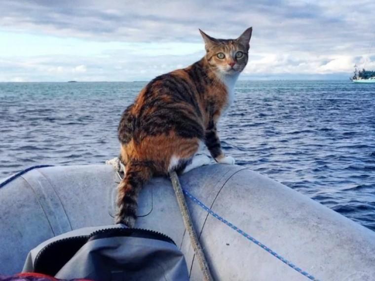 ВИндийском океане спасли моряка, дрейфовавшего вместе скотом больше полугода