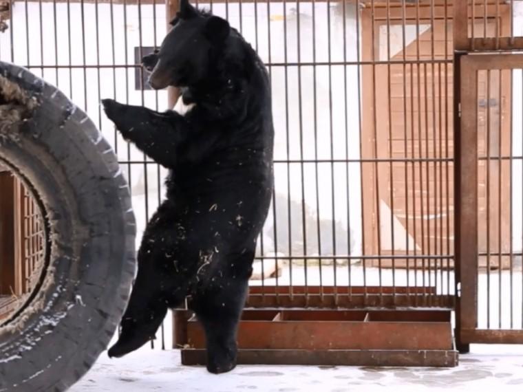 медведь жора зоопарка барнауле неожиданно увлекся балетом