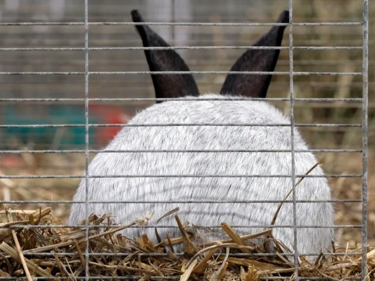 хитрые решительные тюменские кролики сбежали похитителей