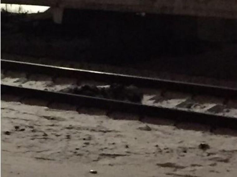 пригороде петербурга поезд сбил человека