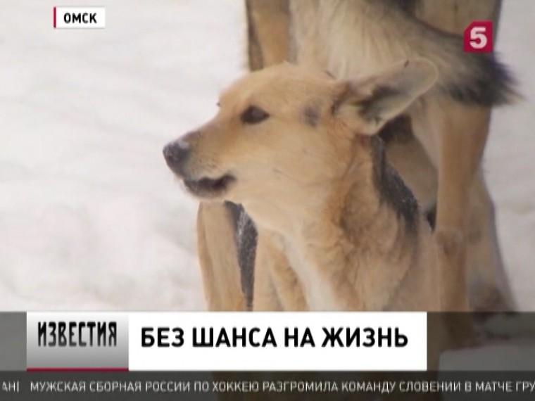 Зоозащитники Омска пытаются спасти жизнь бродячим животным