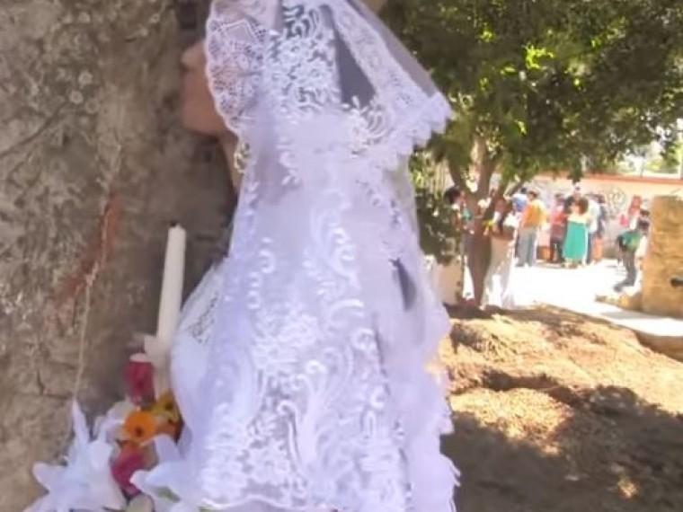 Выйти замуж за… дерево: ВМексике нашли способ спасения лесов