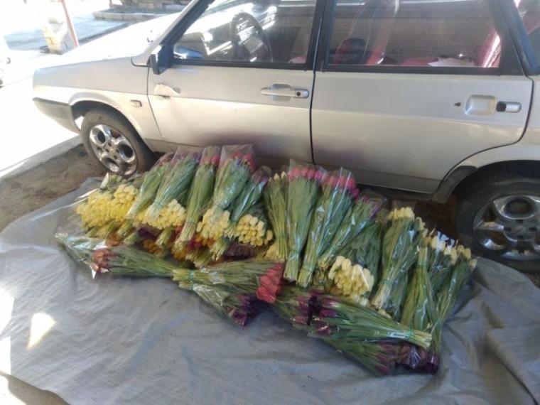 Цветочный воришка дерзко похитил2000 тюльпанов вКраснодарском крае