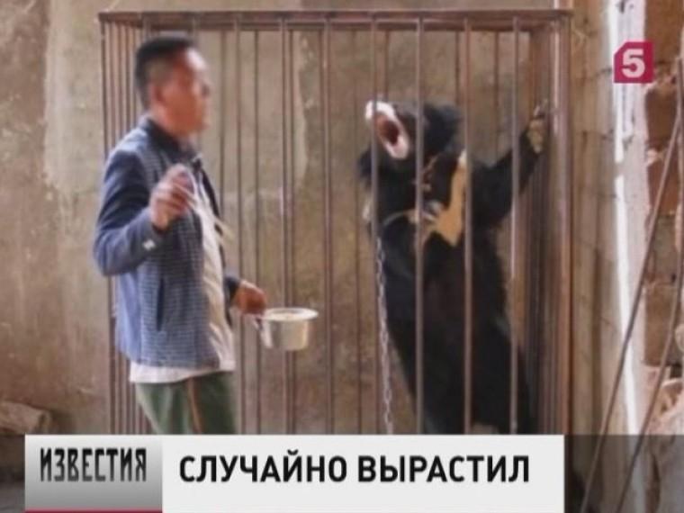 Очень рассеянный китаец вместо щенка вырастил гималайского медведя