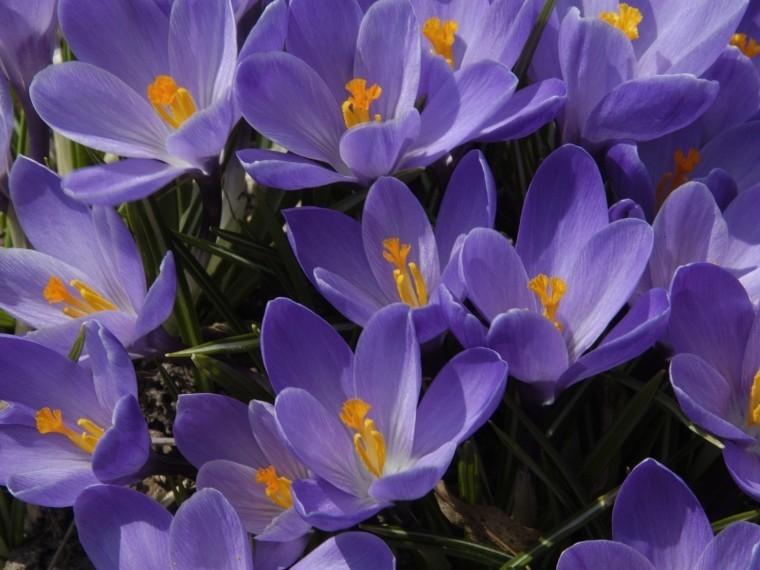 Впетербургский Ботанический сад все-таки пришла весна