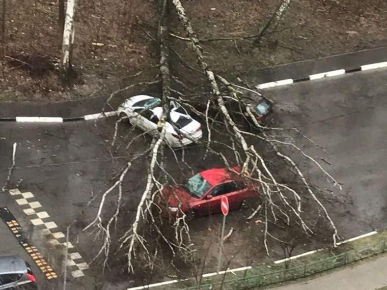 собянин время урагана москве погибла девочка