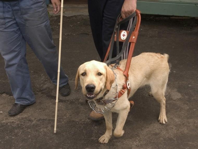 камчатке слепого человека собакой пустили кафе