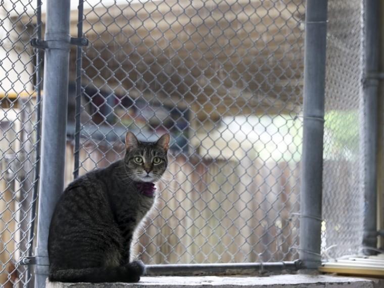 звездой зоопарка уссурийске стала обыкновенная кошка