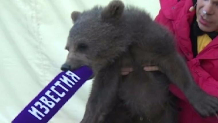 Бледанс рассказала, как спасла жизнь медвежонку, оказавшемуся ночью натрассе