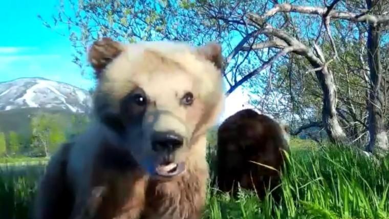 Медвежонок сделал видеоселфи вЮжно-Камчатском природном заповеднике