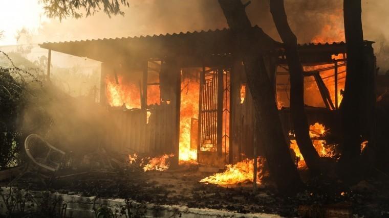 Причиной катастрофических лесных пожаров вГреции могли быть поджоги