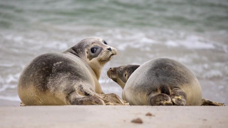 Тюлени-безбилетники отправились вморской круиз наносу корабля— видео