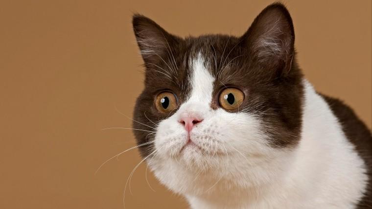 предприимчивый житель кемерово продает кота-экстрасенса миллионов рублей