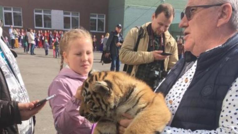 видео директор барнаульского зоопарка голосовать двумя тигрятами