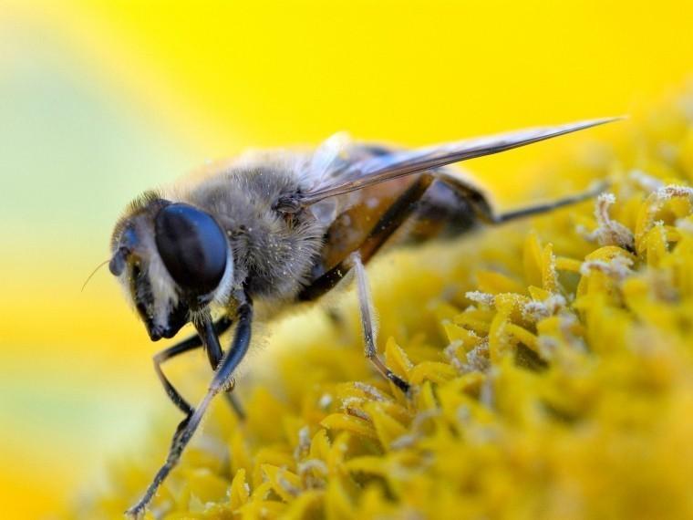 Walmart собирается производить пчел-роботов